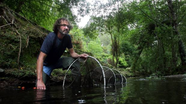 "Massey University freshwater ecologist.Mike Joy says the Govenrment is ""trying to pull a swifty"" with its new swimmable ..."