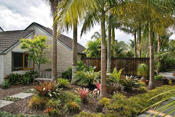 Fourteen-year-old bangalow palms, 6-7m tall, have been planted in north-south rows.