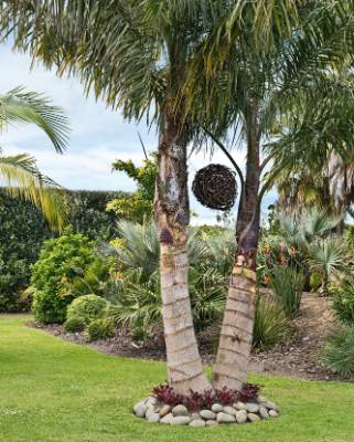 Carolyn planted two queen palms close together for impact; hung between them is a solar-lit grape trimmings ball.