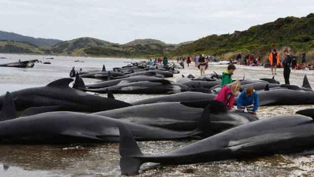 Real Time Whale Beaching Uk