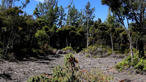 Those involved in the deal with Comvita initially hacked the wrong bit of forest down to accommodate hives; the Miru ...