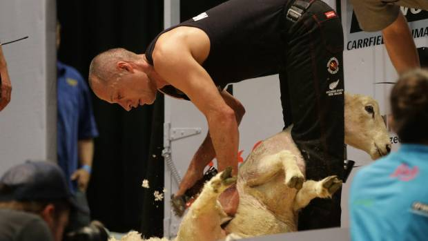 World Shearing and Woolhandling Championships machine shearing winner Johnny Kirkpatrick, of Napier.