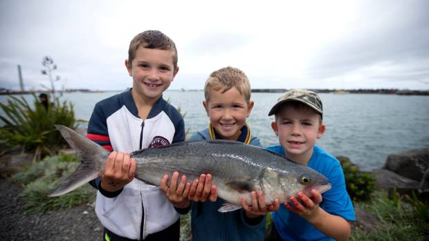New plymouth 39 s take a kid fishing competition swamped by for Take a kid fishing
