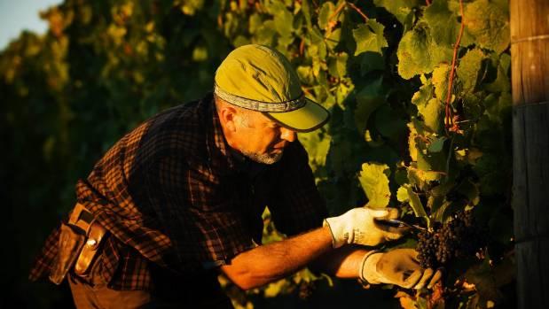 Kono Beverages Marlborough vineyard manager Mondo Kopua. Tohu Wines won the wine industry innovation category.