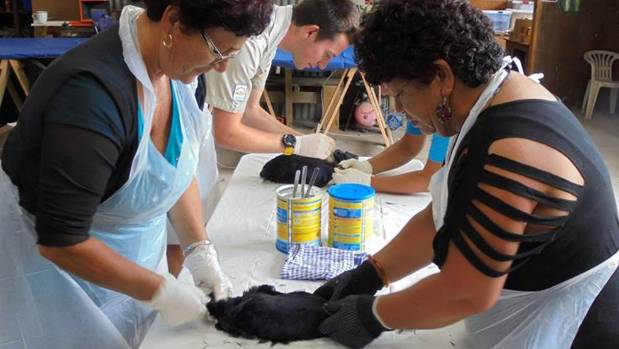 Marie Jones and  Cherie Williams work on a pukeko pelt.