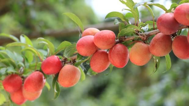 Dwarf fruit trees are generally fuss-free and very easy.