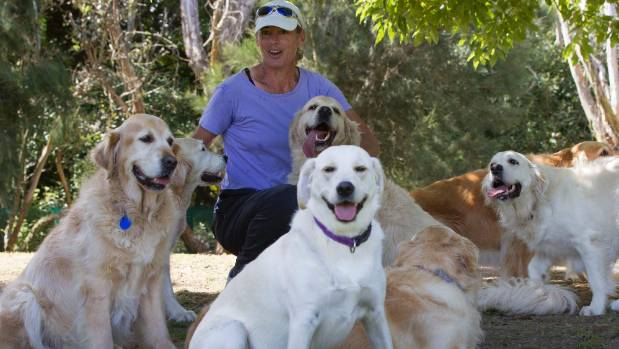 Kristina Martinelli of Goldies Te Horo with a pack of her golden friends.