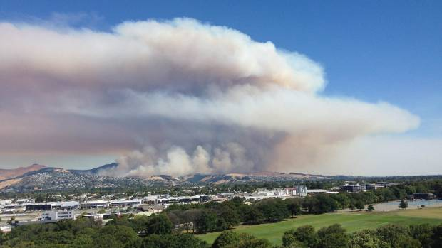 I 39 m an asthmatic in lockdown to avoid smoke from for Grow landscapes christchurch