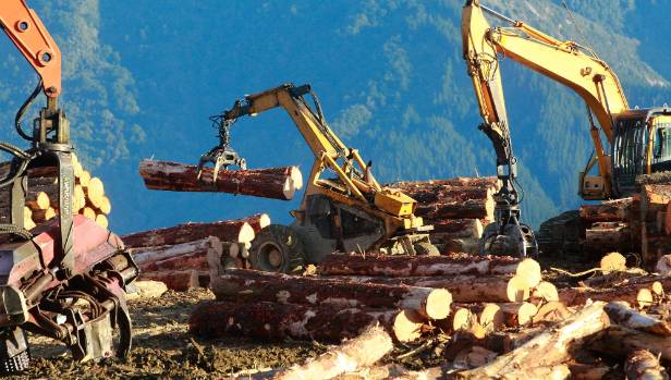 Three people have died at forestry sites this year.