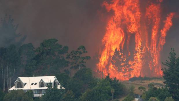 Flames leap out of a large pine plantation behind Westmorland along Worsleys Spur consumed by the huge fire on the Port ...