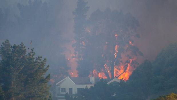 Flames take hold of trees near houses on Worsleys Road.