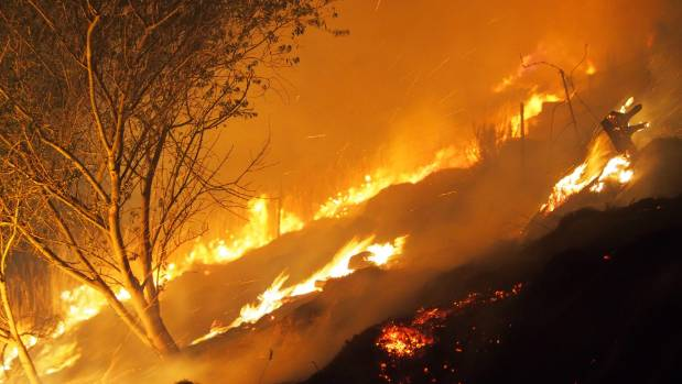 Flames tore through the trees at Victoria Park on Wednesday evening.