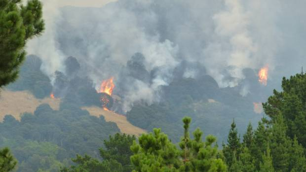 The Ohinetahi Bush Reserve, a protected area with re-planted native forest and a growing bird population, on fire on Tuesday.