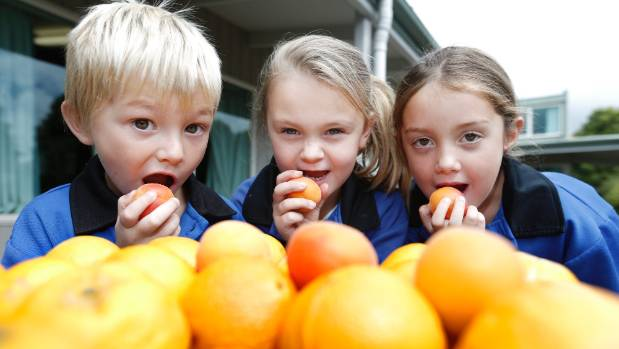 Timaru South School students Cruiz Bool-McDonald, 6, Sophie Hall, 6, and Metallica-Rose O'Keeffe, 6, chomp on apricots ...