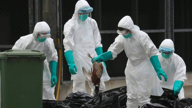 China Jan. bird flu deaths hit 79, most since at least 2013