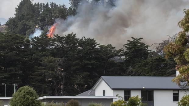Flames appear above the tree tops, near Christchurch homes.
