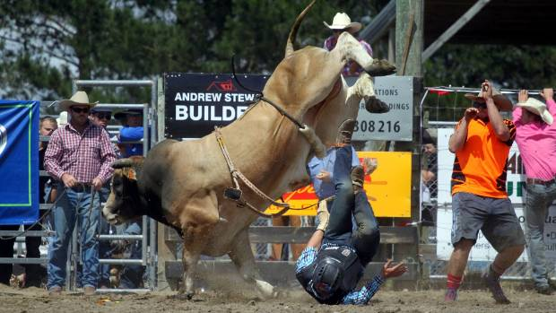 A bucking bull exacts some revenge at the Canterbury Rodeo.
