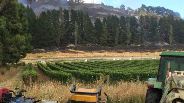 Cracroft Chase Vineyard had a lucky escape when fires that engulfed about 1800 hectares of the Port Hills narrowly ...