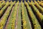 Three vineyard contractors are being taken to the Employment Relations Authority after breaching minimum employment ...