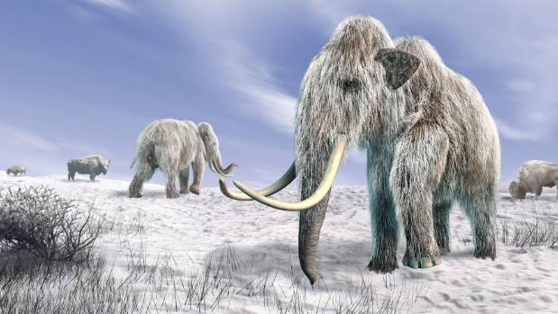 Scientists say the long-extinct woolly mammoth could roam again, thanks to DNA advances.