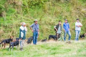 Dog triallists at the Pelorus Sheep Dog Trial Club meeting, near Havelock
