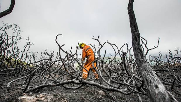 Digging out smouldering tree roots on the Port Hills during the Christchurch fires.