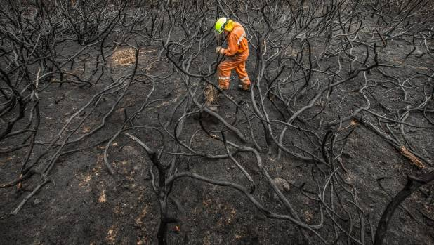 Trevor Andrew of the Ashburton Rural Fire Force digs for smouldering tree roots on the Port Hills during the ...
