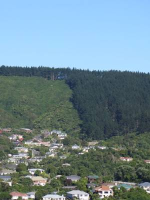 Community environmental volunteer group, Friends of Tawa Bush Reserves, is campaigning for Wellington City Council to ...