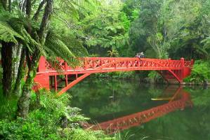 No visit to New Plymouth is complete without a visit to Pukekura Park with its array of native and exotic plants.