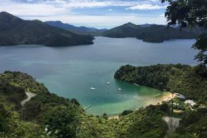 The Marlborough Sounds will be off limits to commercial fishing if a recreational fishing park is established.