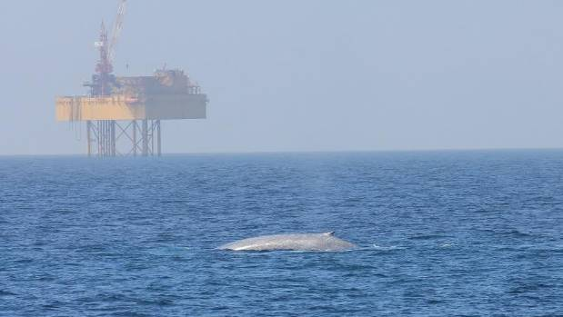 Whales and the oil and gas industry have co-existed in Taranaki for decades.