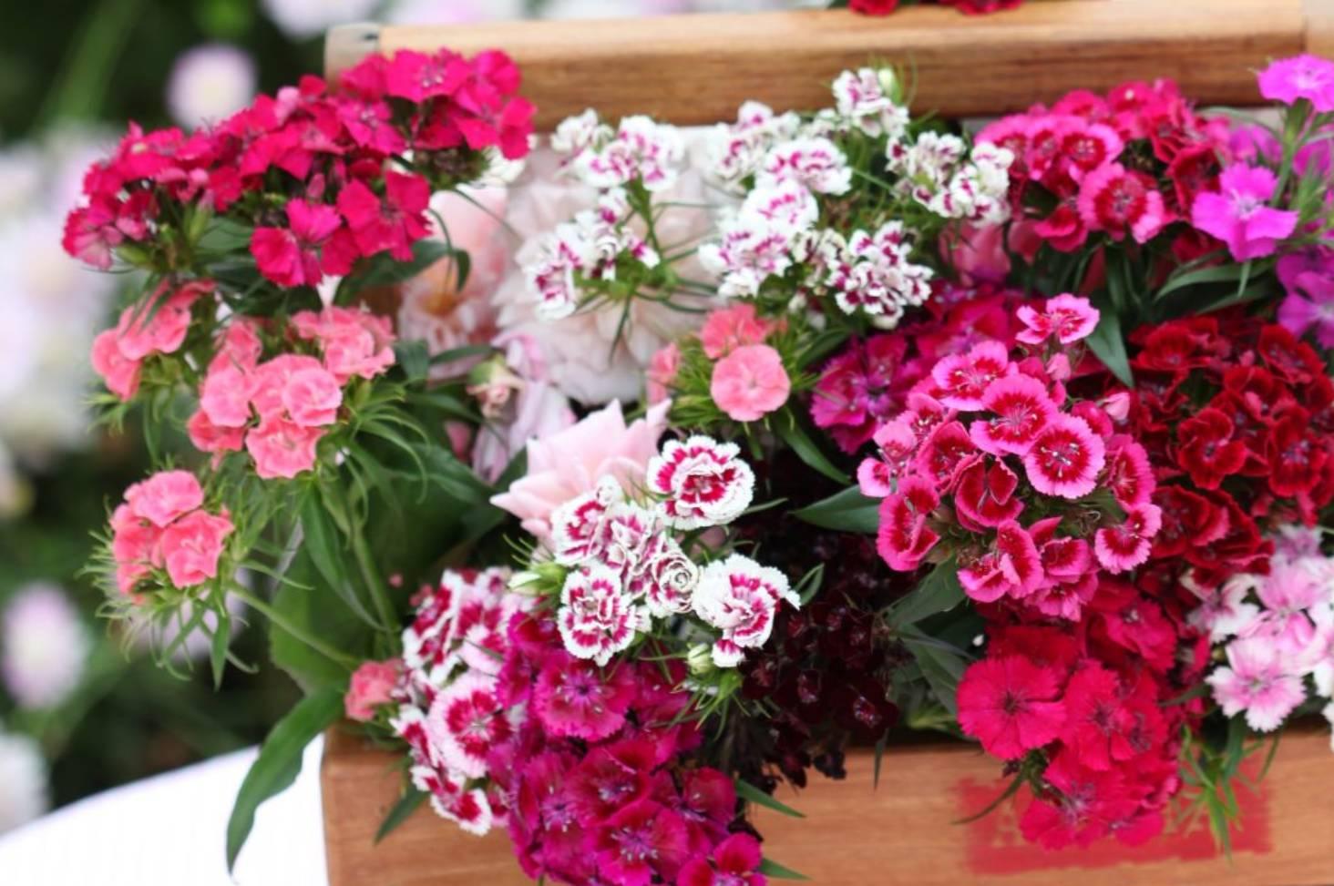 Garden guru lynda hallinans top 9 flowers for picking stuff izmirmasajfo
