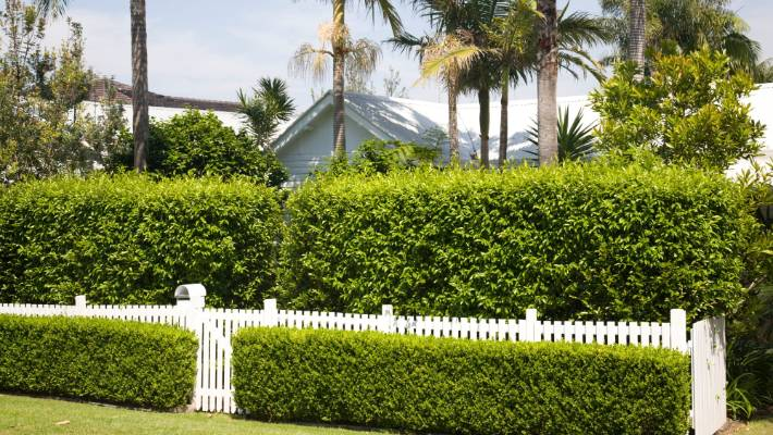 Hedges for sound proofing | Stuff co nz