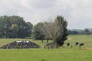 Corrine Rushbrooke's Reporoa farm.