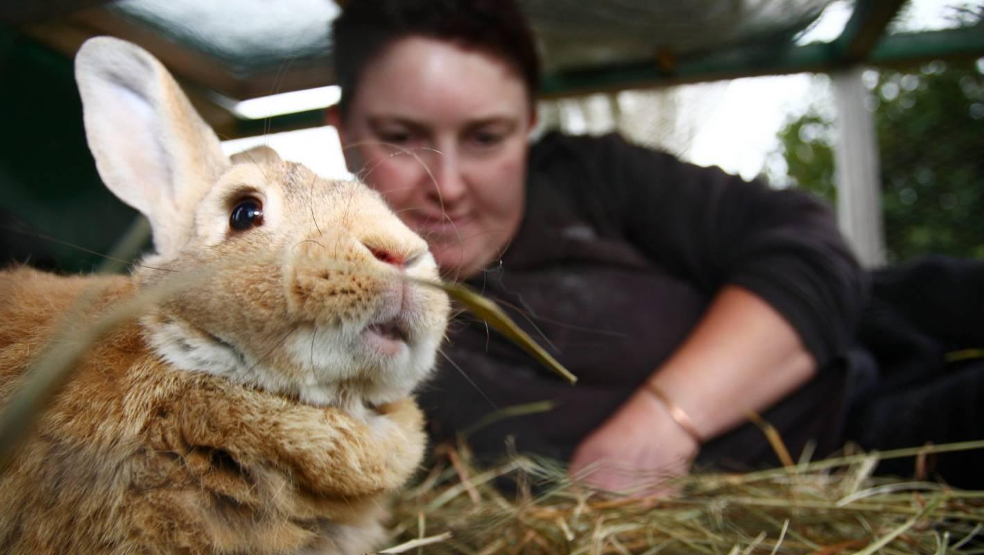 Rabbit Entertainment Ltd