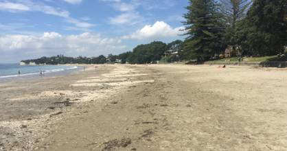 The foreshore between Takapuna Beach playground and the Takapuna Boating Club where the dog flesh was found.