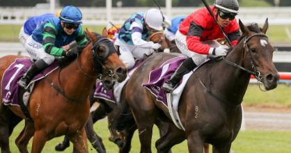 La Diosa, racing as La Bella Diosa across the Tasman, will make her Australian debut on Saturday.