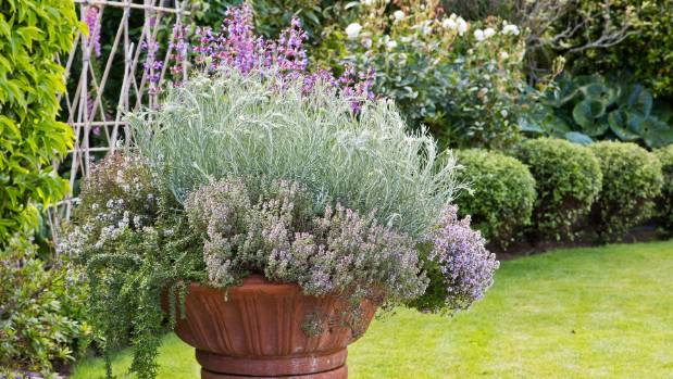 A terracotta planter overflowing with herbs.