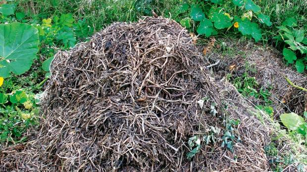 Pea straw mixed with horse manure is applied liberally to the garden.