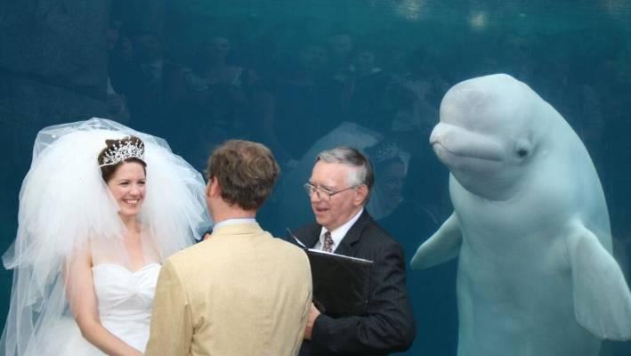 Beluga Whale Upstages Bride Inspires Photoshop Battle Stuff Co Nz