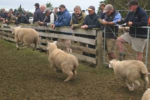 Sheep farmers have got something to smile about as lamb prices come off a low mark.