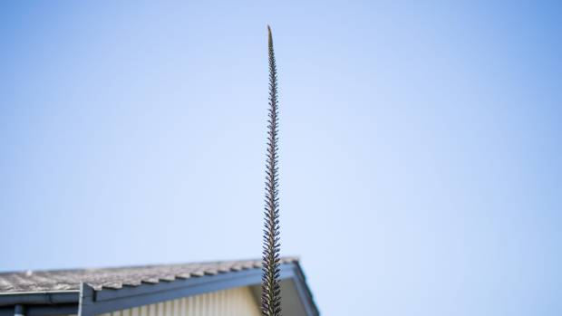 The sky's the limit for this plant!