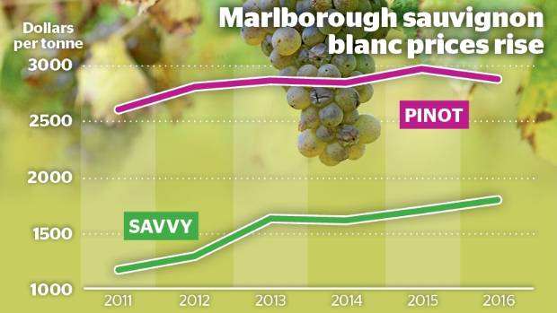 Sauvignon blanc grape prices have been trending upwards.
