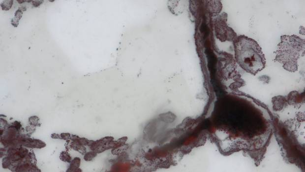 A haematite filament attached to a clump of iron (in the lower right), from hydrothermal vent deposits in the ...