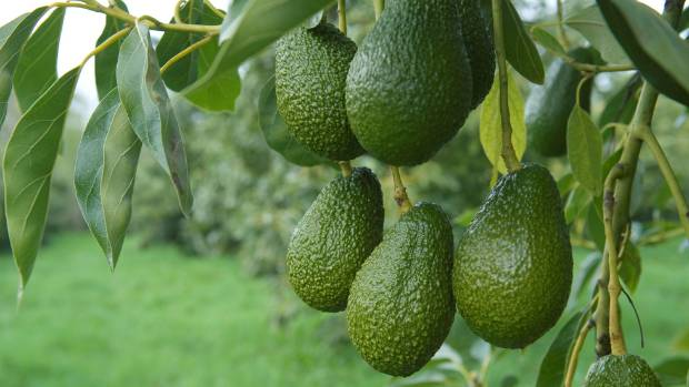 Avocado prices have jumped as high as $7.50 each in NZ.