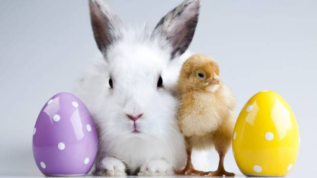Wellington misses chance for easter trading stuff bunnies chicks and eggs but no shopping this easter for wellingtonians negle Image collections