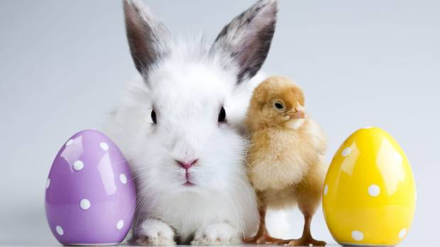 The Easter bunny will be able to buy last minute eggs on his rounds after all three Taranaki councils voted to allow ...