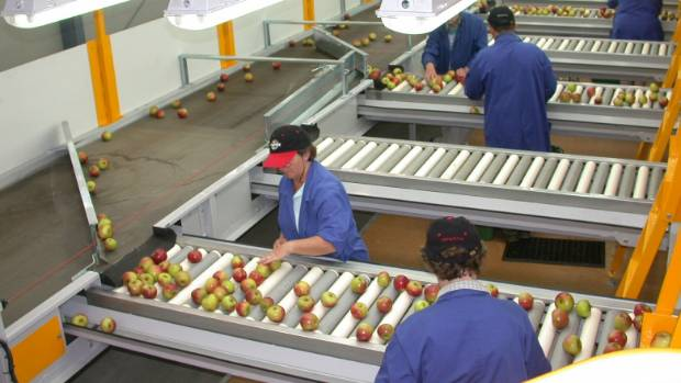 A quality controller employed at a Hastings fruit packing facility has been unsuccessful in claiming he was ...