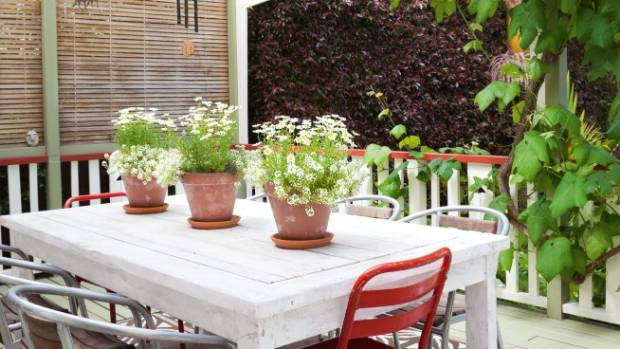 White daisies and alyssum in terracotta pots make a table centrepiece.