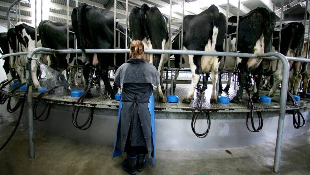 Sharemilking is a perfect stepping stone to reach that goal of ownership.
